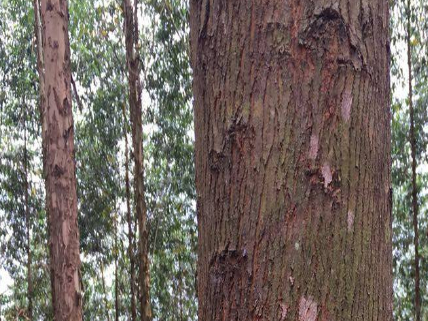 钦州市双峰木业有限公司生态板